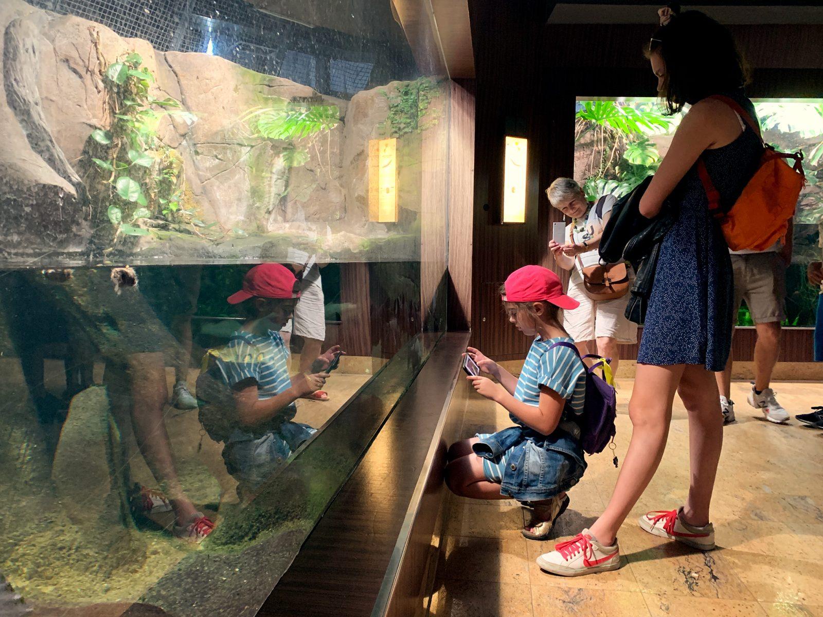 dziewczynka zwiedza akwarium